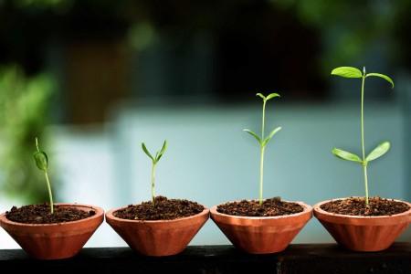 seeds, startup